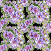 Purple daisies  pattern — Stock Photo