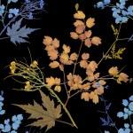Herbarium plants background — Stock Photo #56594537