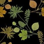 Herbarium plants background — Stock Photo #56594631
