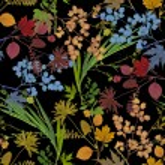 Herbarium plants background — Stock Photo #56594683