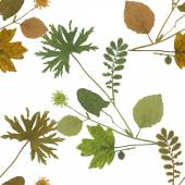 Herbarium plants background — Stock Photo