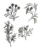 Hand drawn herbal flowers — Stock Photo