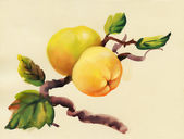 Akvarel jablka, malování — Stock fotografie