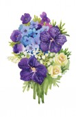 Watercolor violet flowers — Stock Photo