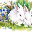 Watercolor rabbits in grass — Stock Photo #67840355