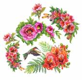 Alstroemeria flowers and humming-birds — Stock Photo