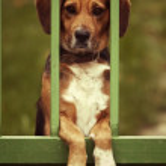 Little beagle dog — Stock Photo #52125369
