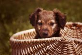 Cute dog puppy — Stock Photo