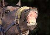 Funny horse portrait — Stock Photo