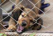 Dachshund puppy behind the wire mesh fence — Stock Photo