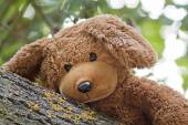 Cute toy bear — Stock Photo