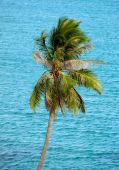 Palm tree against ocean — Stock Photo