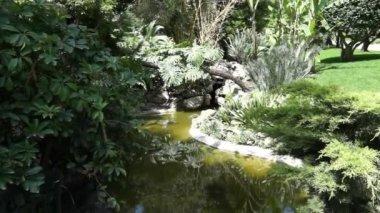 Monaco - Garden — Vídeo de Stock