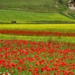 Cultivated fields in the Castelluccio di Norcia Valley, Umbria - Italy — Stock Photo #59719845
