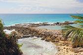 On coast of Atlantic Ocean. Guadeloupe — Stockfoto