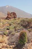 Las Canadas caldera. Teide, Tenerife, Spain — Stock Photo