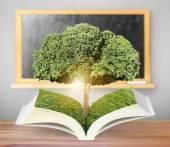 Open book with green tree — Foto de Stock