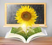 Open sun flowers growing book — Стоковое фото