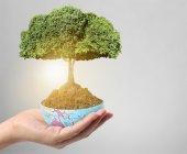De la mano del árbol — Foto de Stock