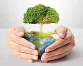 Tree in hand — Stockfoto