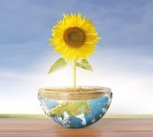 Sunflower and Earth — Stock Photo