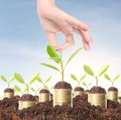 Green plant on the gold coins  — Stock Photo