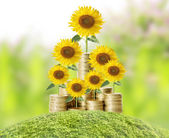 Flowers growing from money — Foto Stock