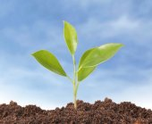 Young plant new life  — Stock Photo