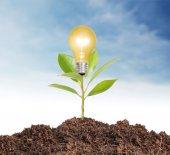 Ideas bulb light in the hand  — Stok fotoğraf