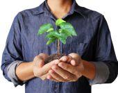 Man hands holding plant — ストック写真