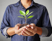 Man hands holding plant — Stock Photo