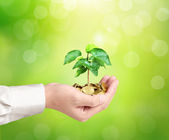 Man holding plant sprouting from a handful of coins  — Stock Photo