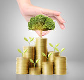 Hand holding young green plant and coins money — Stock Photo