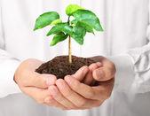 Przytrzymanie roślina ręce człowieka — Zdjęcie stockowe