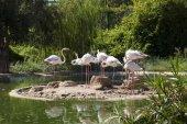 Flamingo bird in lake photo — Stock Photo