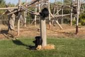 Family of monkey, relatives photo — Stock Photo