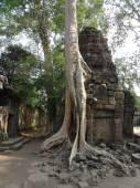 Ta Prohm, Cambodia — Stock Photo