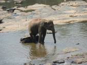 Elephant on the river — Stock Photo