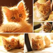 Cute yellow kitten set — Stock Photo