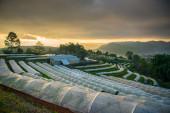 Plantation sunrise landscape,The Royal Agricultural Station Inthanon,chiangmai, thailand — Stock Photo