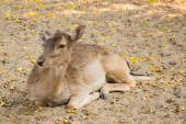 Deer couch relaxing afternoon — Stock Photo