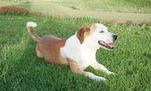 無料幸せな犬 — ストック写真