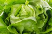 Fresh heart of lettuce — Stock Photo