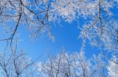 Winter skyscape — Stock Photo