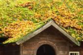 Autumn landscape, soft filter — Stock Photo
