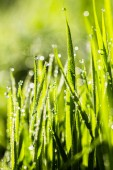 Morning dew — Stock Photo