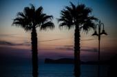 Palm trees silhouette — Stock Photo