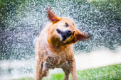 Shaking dog outdoors — Foto Stock