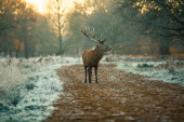 Red deer in forest — Stock Photo