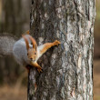 Squirrel sits on a tree — Stock Photo #63926321